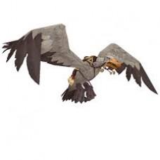Илокрылый альбатрос